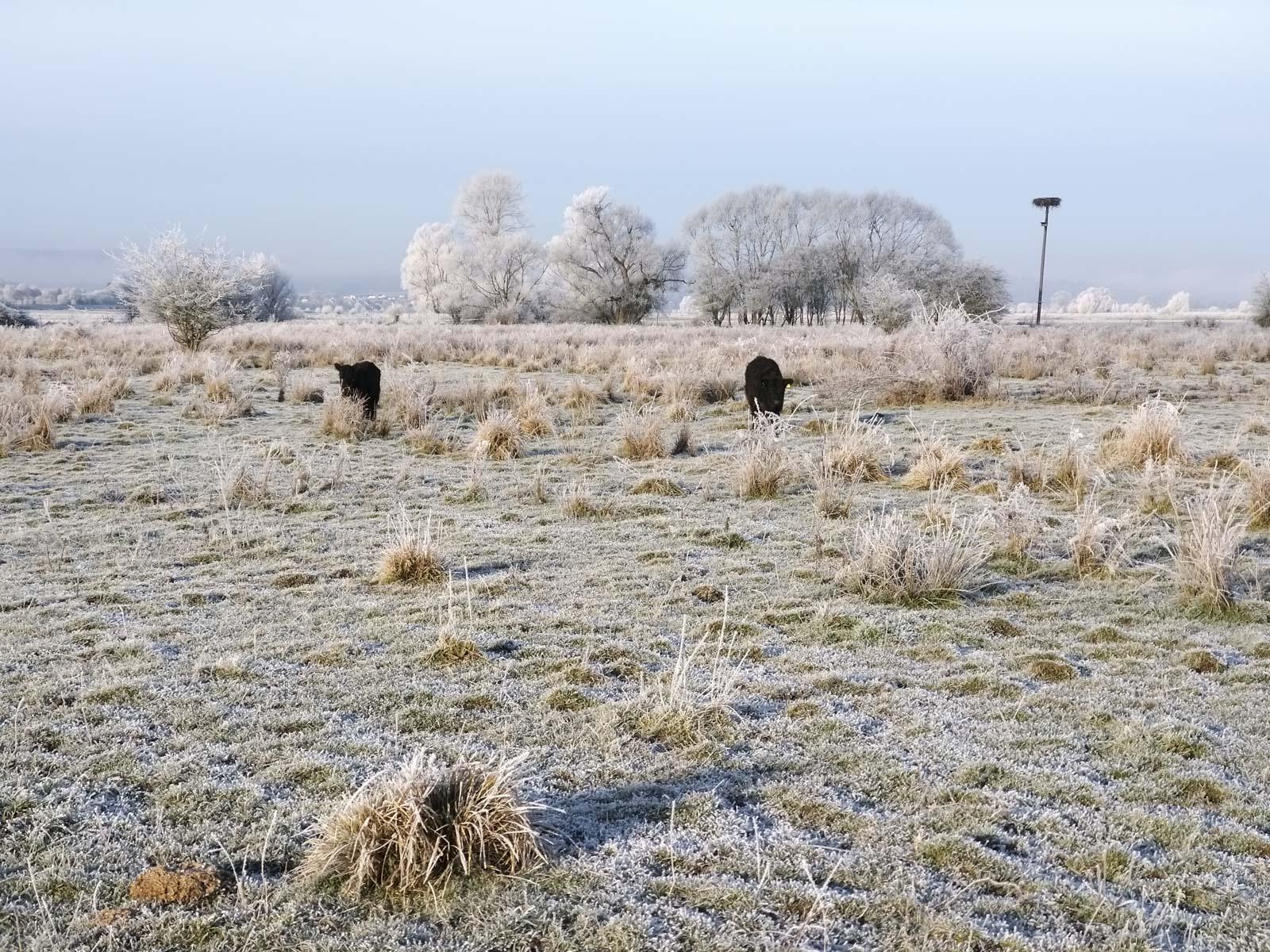 winterwonderland auch ohne schnee galloway